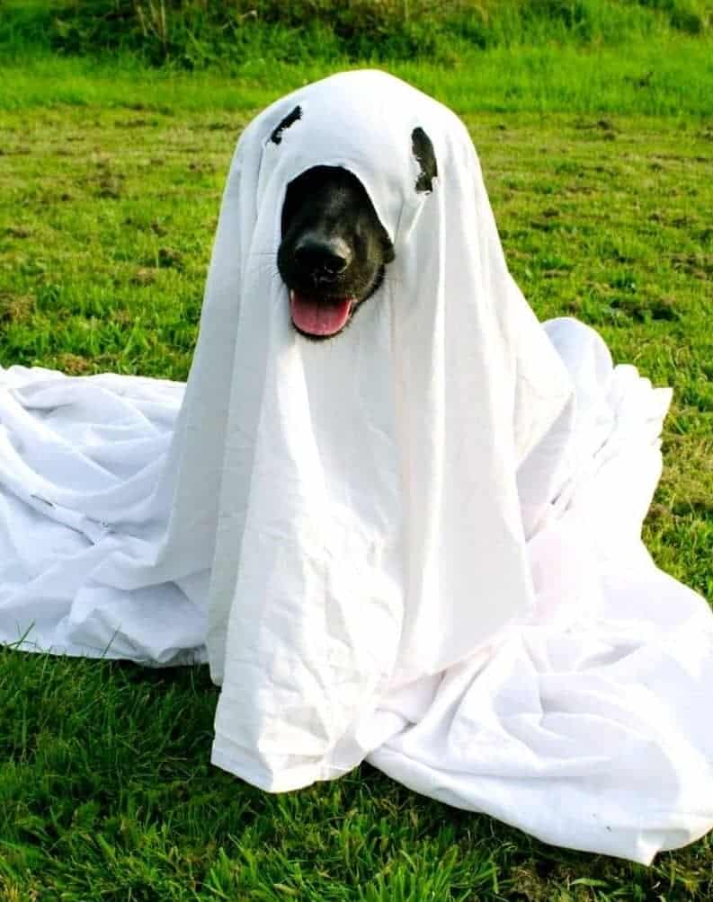 dog in a sheet ghost costume sitting on the grass